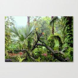 Singapore Botanical Garden 2 Canvas Print