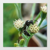 insect Canvas Prints featuring Insect by Angelandspot