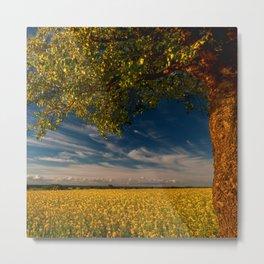 Wonderful springfields with beautiful sky - Rape Metal Print