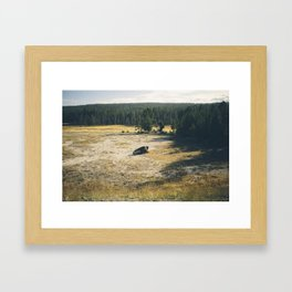 Yellowstone Bison Framed Art Print