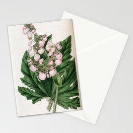 Flower 1668 begonia heracleifolia Parsnip leaved Begonia17 Stationery Cards