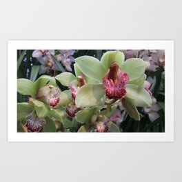 Pink and Green Orchid Art Print