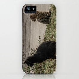 Stray Cats iPhone Case