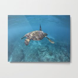 Turtle swimming through the reef Metal Print