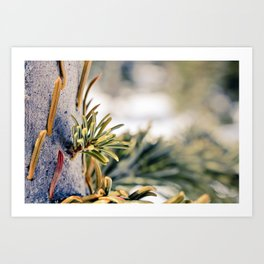 Winter in BC Art Print