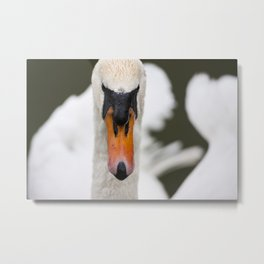 Mute Swan Metal Print