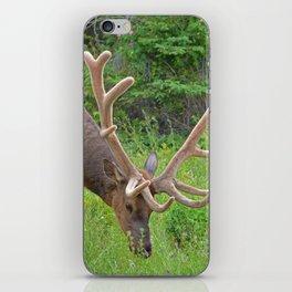 Elk with his velvet in Jasper National Park iPhone Skin