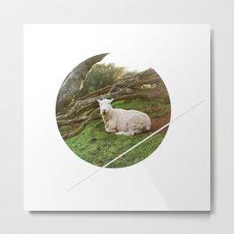 Lamb in the Grass  Metal Print