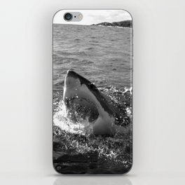 Great white shark, Carcharodon carcharias, in black and white iPhone Skin
