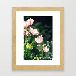 Pink Poppies Framed Art Print