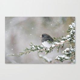 Snowbird on a Snowy Branch (Junco) Canvas Print