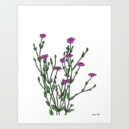 Connecticut Wildflowers Art Print