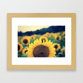 sunflower beauty no. 2 Framed Art Print