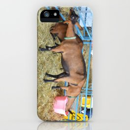 Family of Domestic Goats iPhone Case
