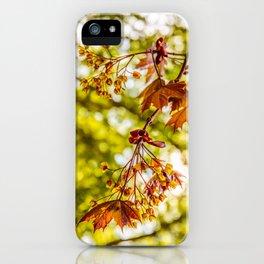 Maple blooms iPhone Case