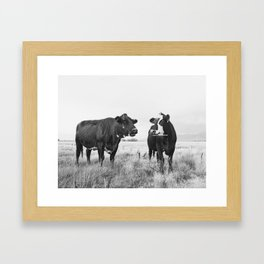Cattle Photograph in Black and White Framed Art Print