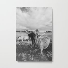 Black and White Highland Cow - Moo Metal Print
