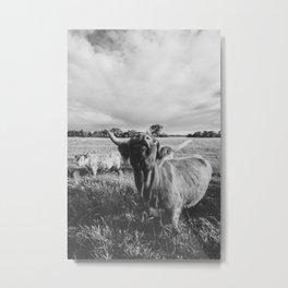 Black and White Highland Cow - Moo Metal Print