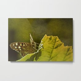 Speckled Wood Butterfly 2 Metal Print