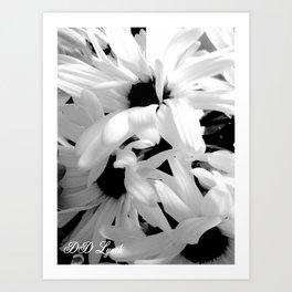 Shasta Daisies In The Light Art Print