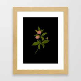 Lantana Trifolia Mary Delany Vintage Paper Flower Collage Floral Botanical Art Framed Art Print