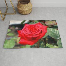 Amazing Elegant Vibrant Open Red Rose Close Up Ultra HD Rug