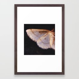 Wing Framed Art Print