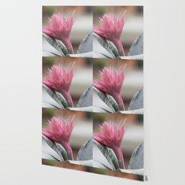 pink aechmea  flower in bloom  in the vase Wallpaper