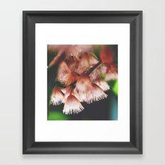 Wattle Pink Framed Art Print