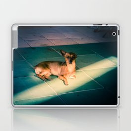 Dog in Dong Hoi Laptop & iPad Skin