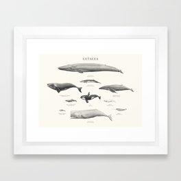 Cetacea Framed Art Print