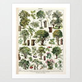 Adolphe Millot - Arbres A - French vintage botanical poster Art Print
