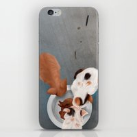 kittens iPhone & iPod Skins featuring Kittens by Jessika