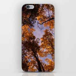 Tree Canopy iPhone Skin