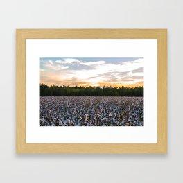 Cotton Field 11 Framed Art Print