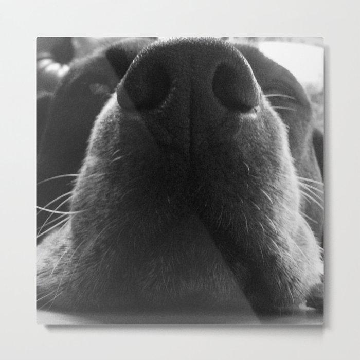 Beagle Nose Metal Print