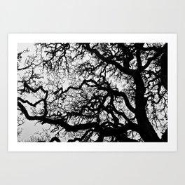 The Twisted Tree Art Print