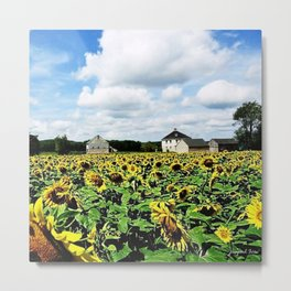New England Sunflower fields and barns by Jéanpaul Ferro Metal Print