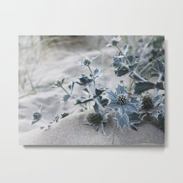 beach thistle Metal Print
