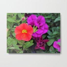 Calibrachoa Flowers Metal Print