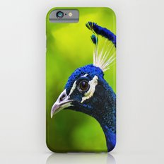 Pretty as a Peacock I iPhone 6s Slim Case