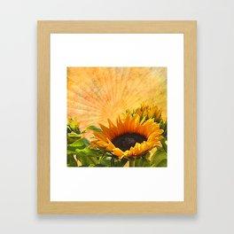 Good Morning Sunflower Framed Art Print