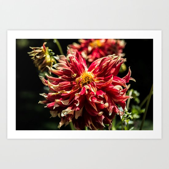 Fire Flower Art Print