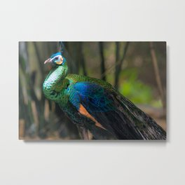 Green Peafowl Metal Print