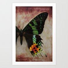 Sunset Moth Wing Art Print