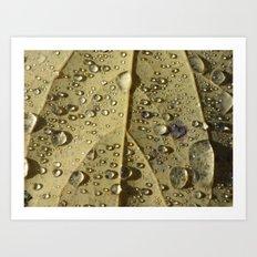 rain drops 2015  Art Print