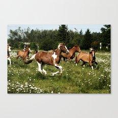 Spring Horse Run Canvas Print