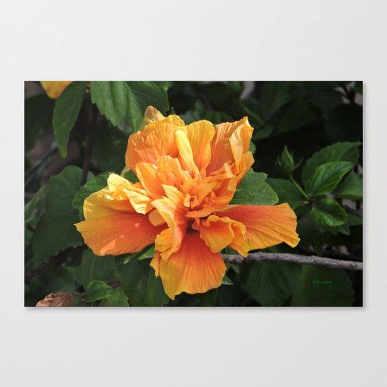 The Golden Double Hibiscus Next Door Canvas Print