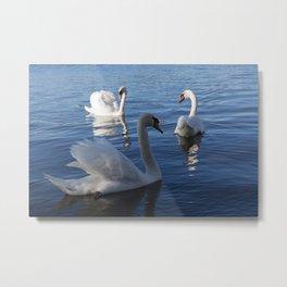 Three Swans On Lake Varese Metal Print