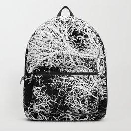 winter tree, looking down Backpack
